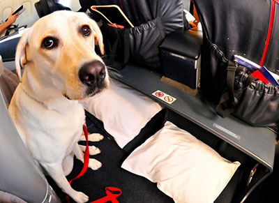 USA Service Dogs Registry: Register your service dog today